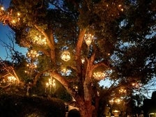 The Chandelier Tree in Silver Lake