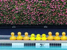 Rubber ducks at Farmer's Daughter Hotel