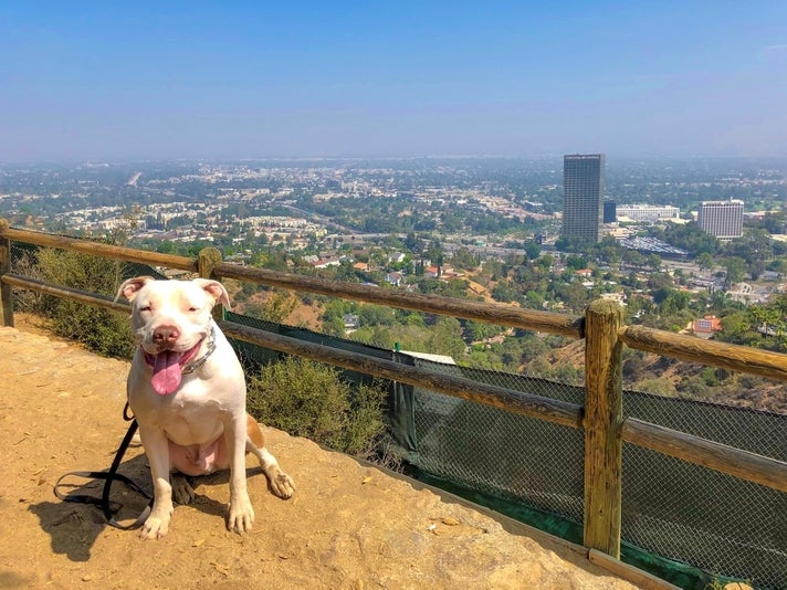 Quincy in the Valley by @ruffcutzdtla