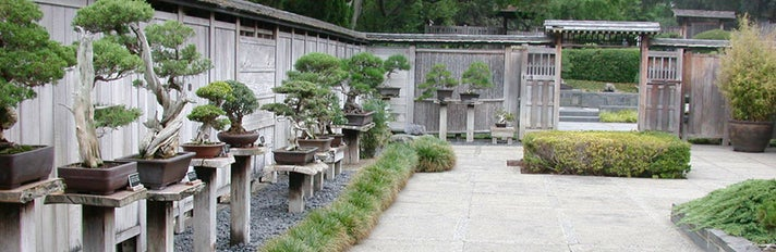 Bonsai Collection at The Huntington