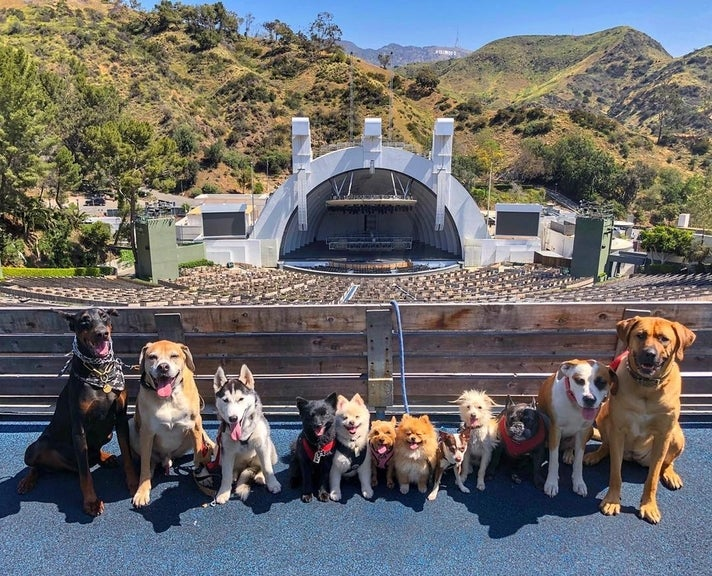@ruffcutzdtla dogs at the Hollywood Bowl