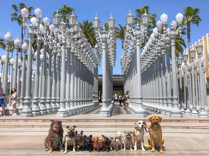 """@ruffcutzdtla dogs in front of """"Urban Light"""" at LACMA"""